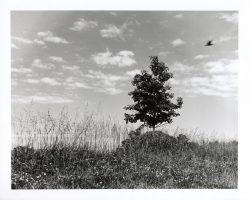 One Tree on the Horizon